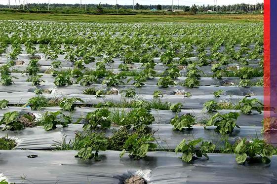 Industri Agro dan Pengurusan Pertanian